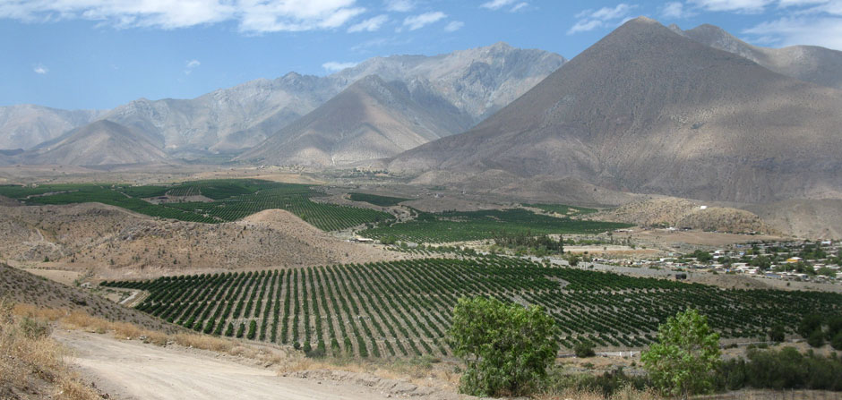 Elqui Valley, Vicuna