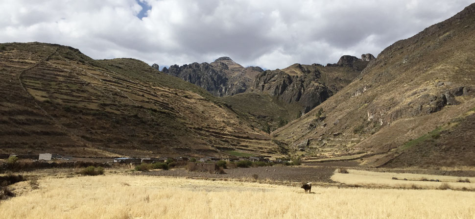 Andean high altitude pastures